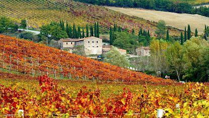Siena Online Castellina in Chianti